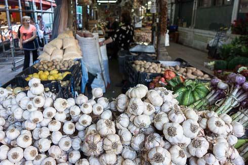 garlic picture