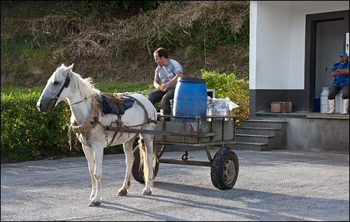 milk truck, sete cidades